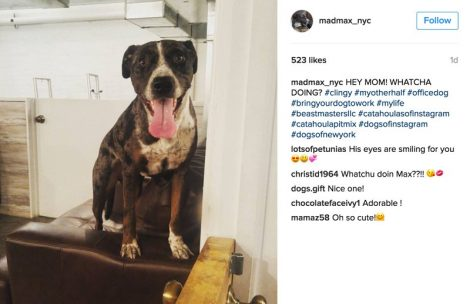 what-to-post-on-instagram-dog